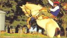 Typical gaucho riding a horse
