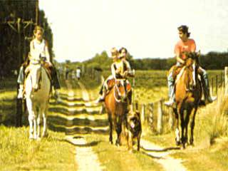 Riding horses in a ranch in the Pampas